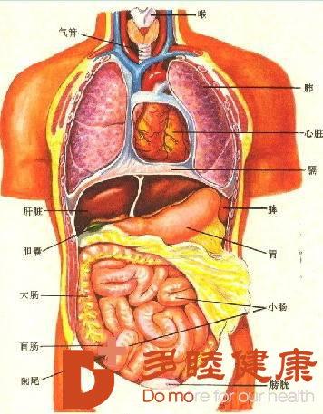 日本干细胞治疗|人体的器官都是怎样排毒的