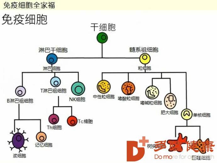 日本干细胞-干细胞与免疫细胞如何选择,哪个好?
