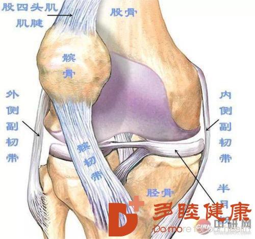 日本干细胞治疗在骨科领域的应用(四)肌腱韧带组织修复