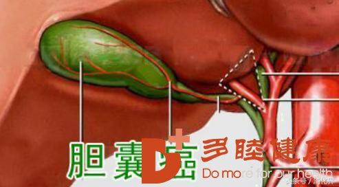 日本胆囊癌治疗:胆囊癌知识