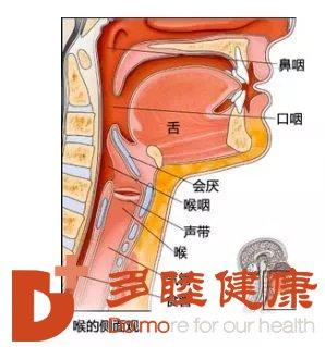 喉癌治疗:针对喉癌预防,你是这样得的喉癌