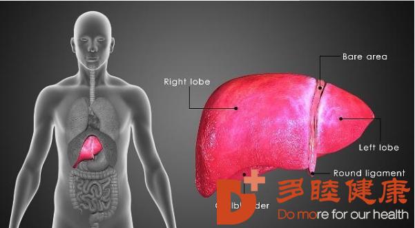 干细胞疗法8个项目涉及467名受试者,明显改善肝功能