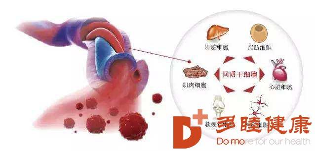 """日本干细胞:关节""""炎""""重性,干细胞治疗你了解多少?"""