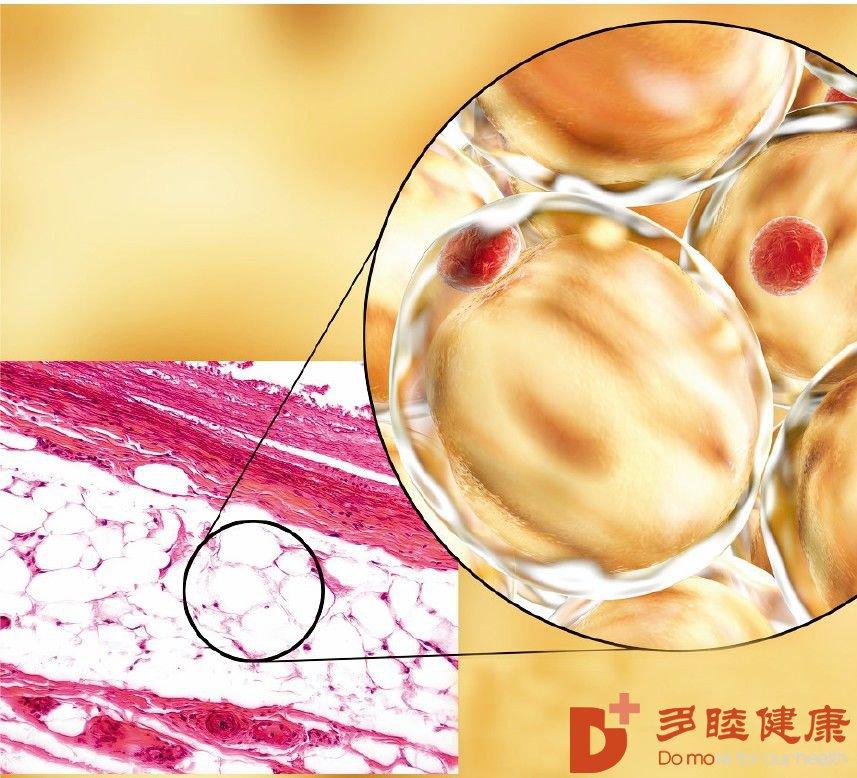 人体在慢慢衰老,干细胞不让你老太快!