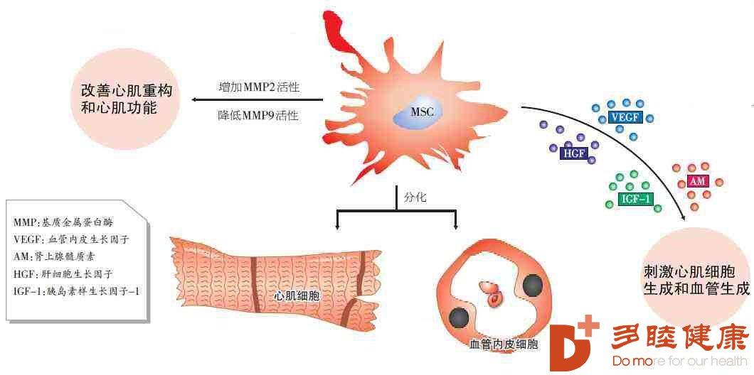 干细胞各种功能治疗心肌梗死!