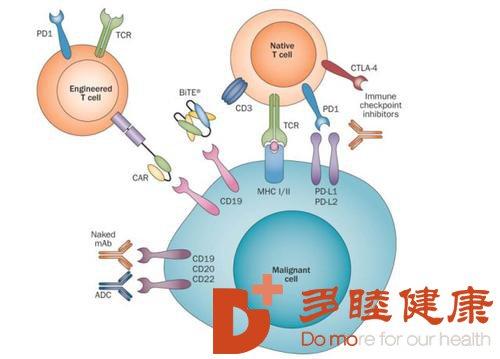威胁生命的肿瘤怎么治疗?免疫治疗值得推荐