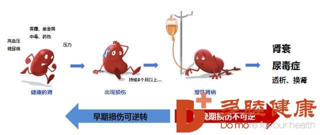 重磅消息!干细胞研究有望治愈难治性肾病