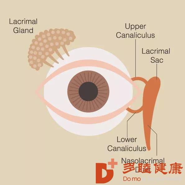 全球超过22亿人视力受损或失明-干细胞能做什么?