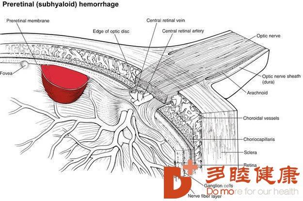 眼底病是否能用干细胞能治疗么?