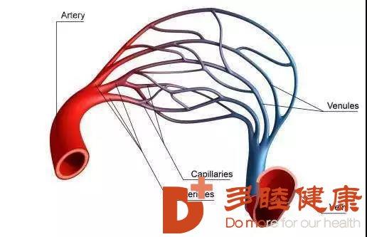 血液净化:你知道血液循环的路径有几条吗?
