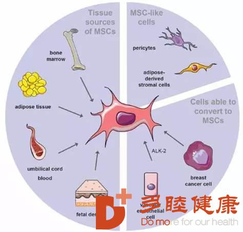 干细胞治疗:干细胞有效调节与改善内分泌系统