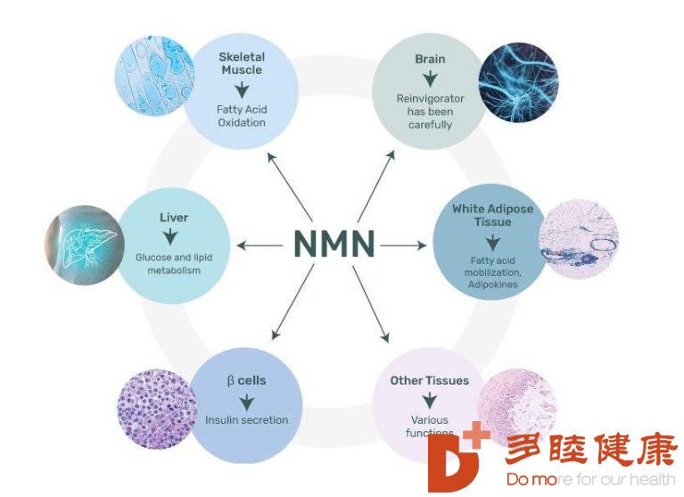 """NMN治疗:抗衰老NMN""""药"""",日本为何如此火"""