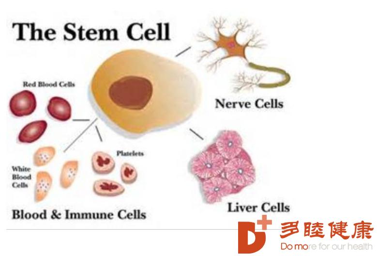 干细胞治疗:干细胞应用于各种疾病,人体细胞再生!