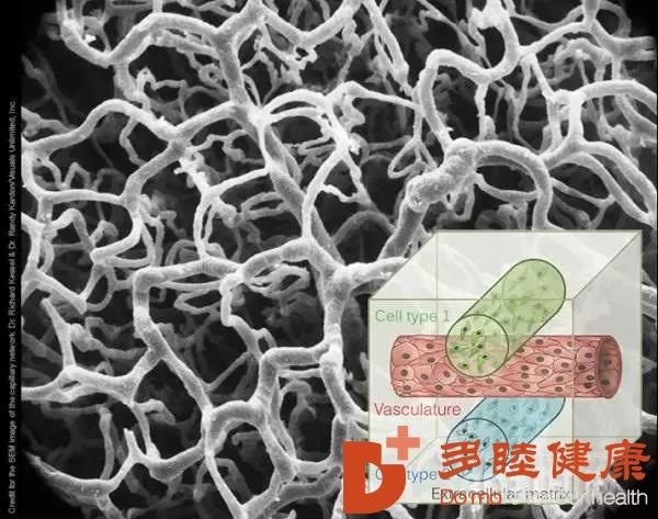干细胞治疗:令人惊叹的干细胞修复再生能力