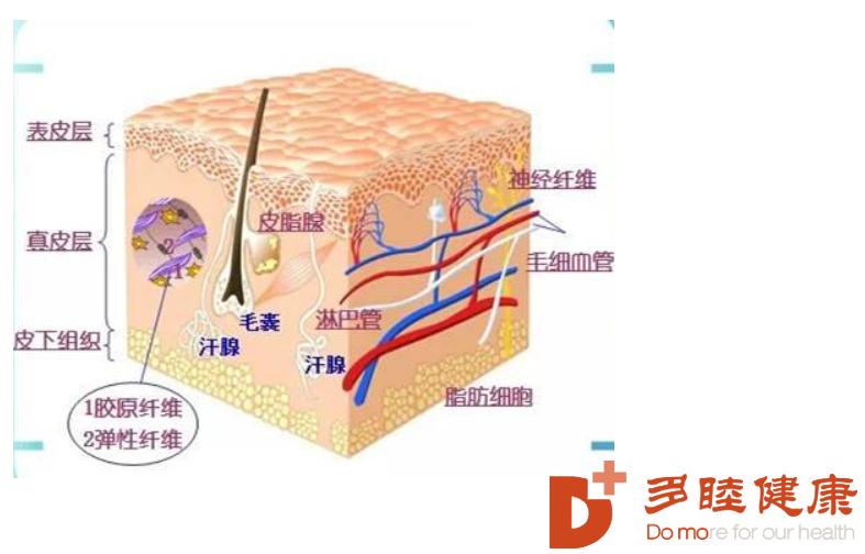 干细胞治疗:干细胞抗衰老,帮助你抵抗岁月的侵袭