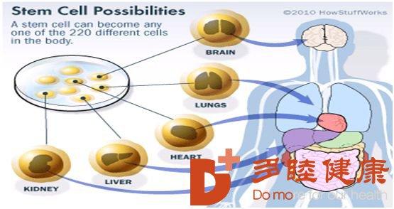 干细胞治疗:干细胞治疗糖尿病的终结者