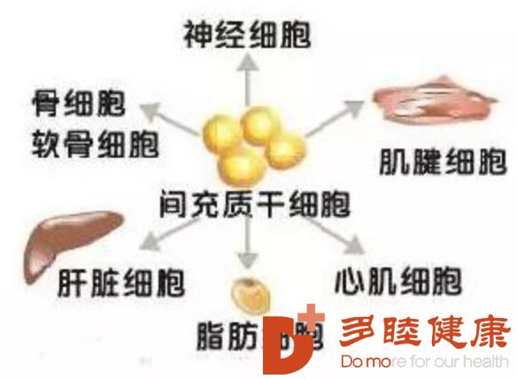 干细胞治疗:间充质干细胞治疗胰腺炎的研究进展