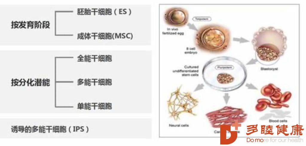 干细胞治疗:干细胞认识的误区,看完这个终于明白了!
