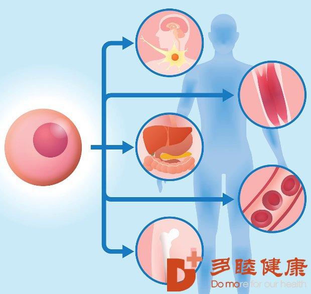 干细胞治疗:为什么干细胞治疗价格这么昂贵?