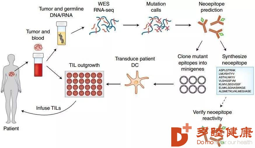 干细胞治疗:干细胞免疫调节调理人体六大系统