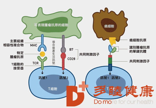 日本免疫细胞治疗:免疫细胞与人体健康的四大关系!