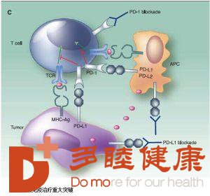 揭秘日本的免疫疗法到底