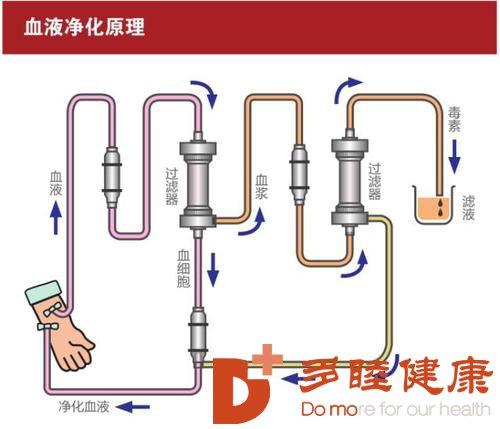 日本血液净化:什么是血液黏稠,如何预防血液粘稠呢