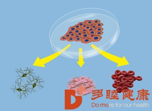 日本干细胞:如何选择正确得干细胞抗衰治疗